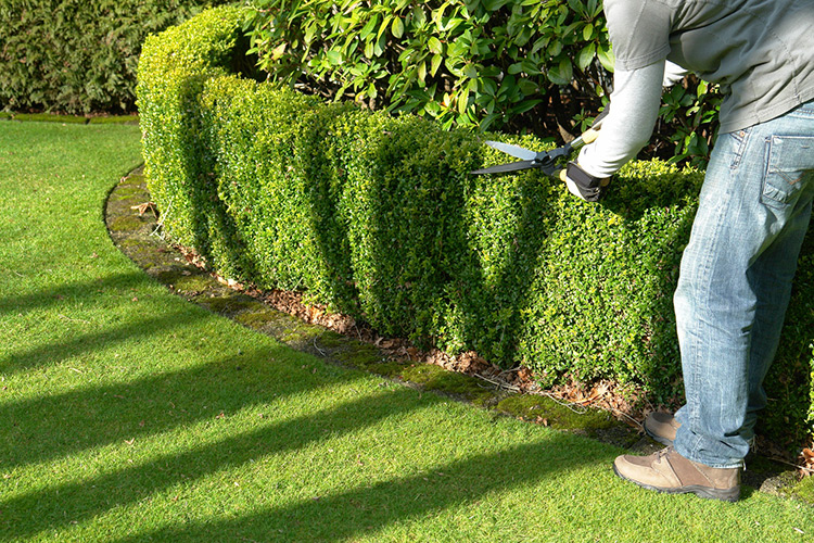 gestione-manutenzione-giardini-landscaper3