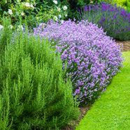 realizzazione-giardini-landscaper